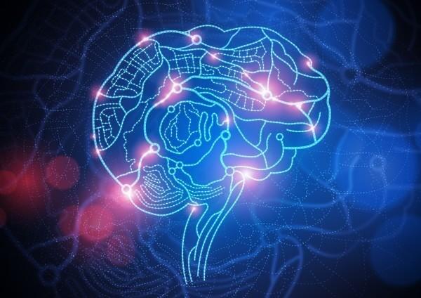 Mozek - Jak spojení v mozku ovlivňují vztahy Mentální vztahové mapy